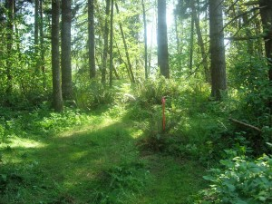 2+ acre parcels on quiet forested land
